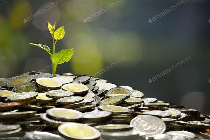 Negocios, ahorro, crecimiento, Concepto económico