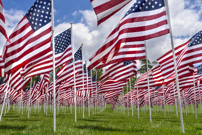American flags on a green grass