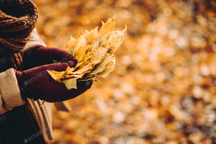 Bouquet of autumn yellow maple leaves in female gloved hands. Ground covered with orange leaves in