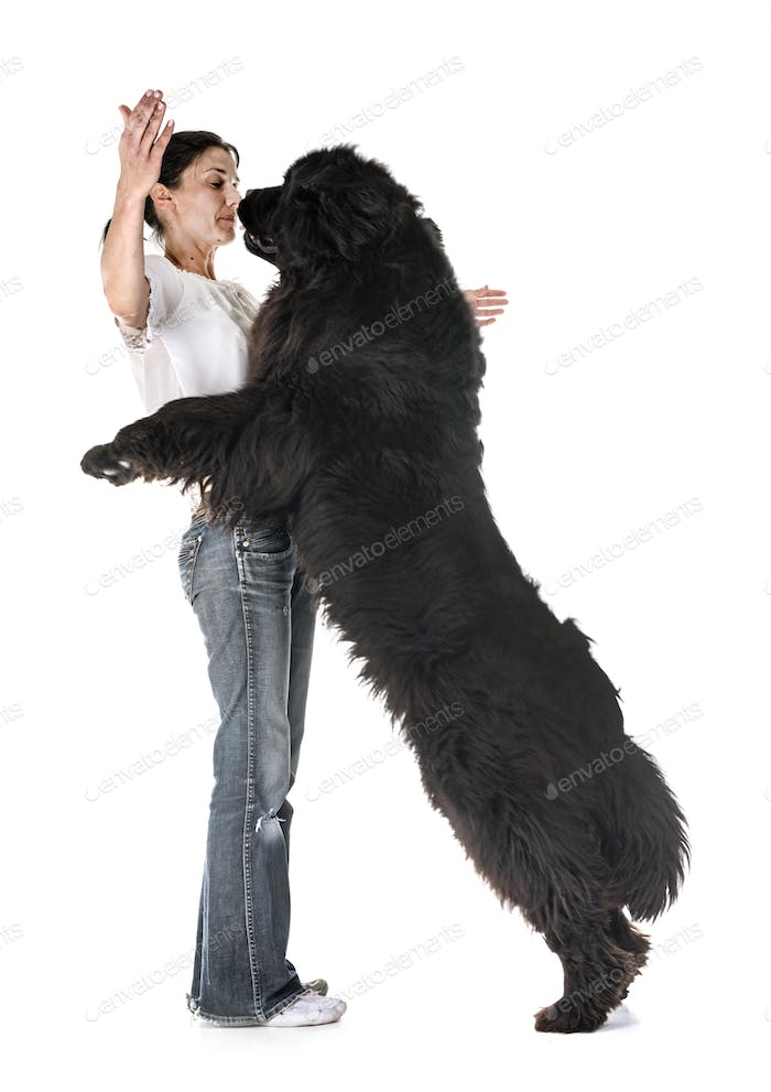 newfoundland dog and woman