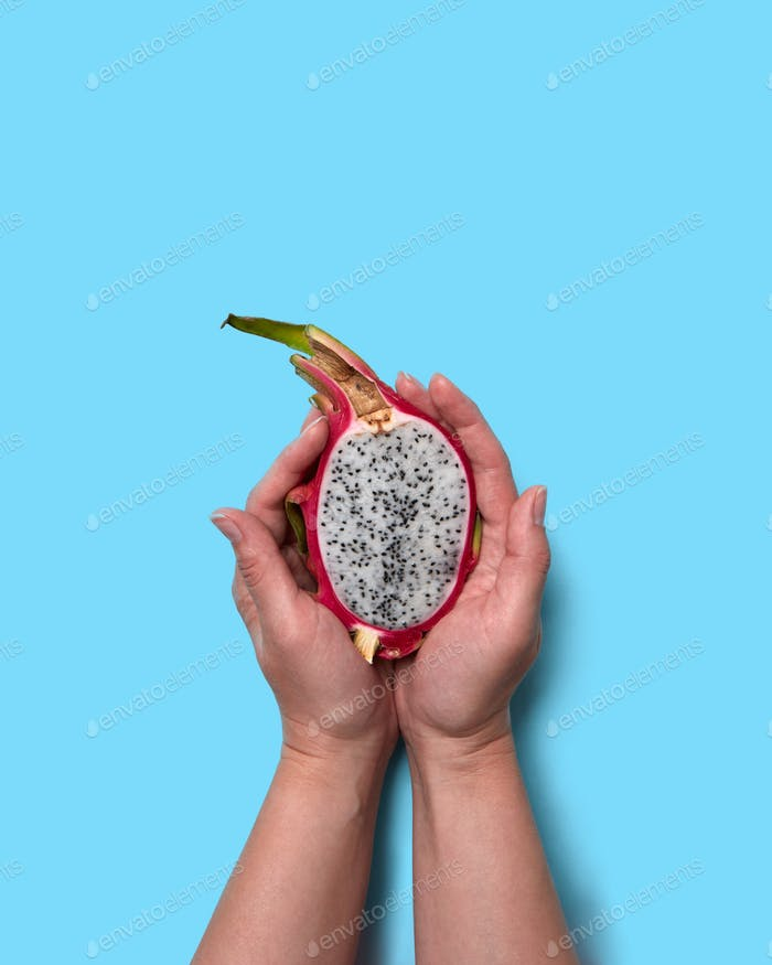 Half of an organic exotic fruit pitahaya hold the woman's hands on a blue background with space