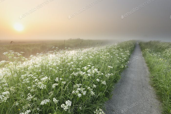 cycling path by river and wildflowers at sunrise