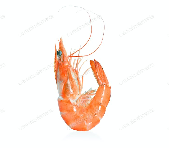 Cooked shrimps,prawns isolated