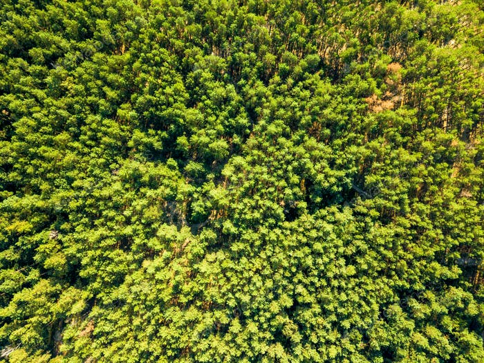 Natural background of green forest on a sunny day. Aerial view of the drone as a layout for your