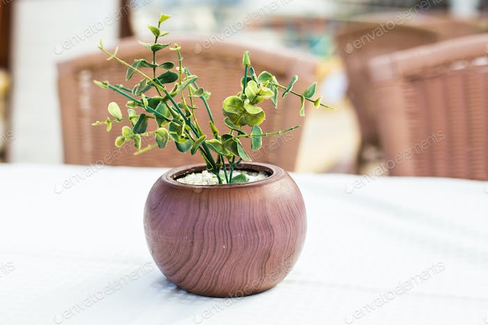Green potted plant outdoor