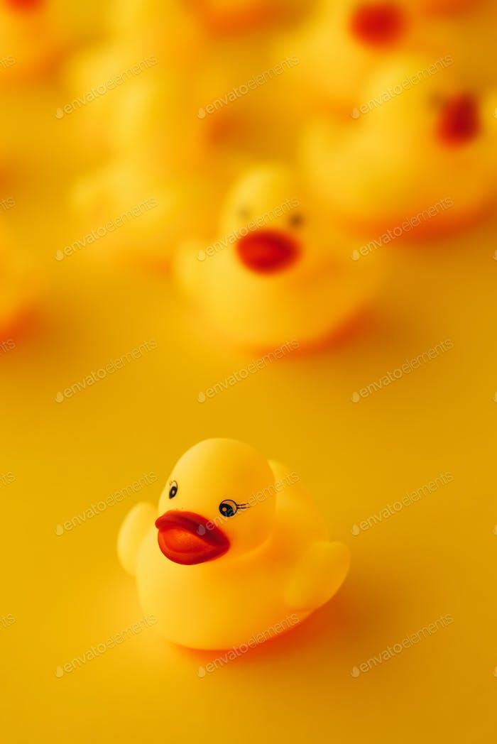 Rubber ducks in leadership concept