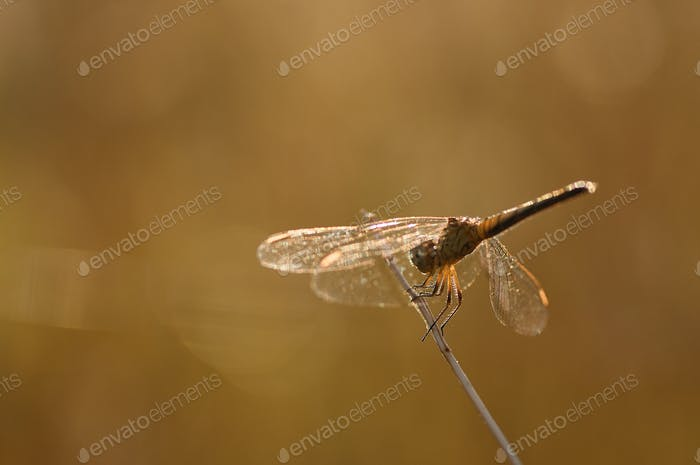 Dragonflies perched on branches in warm conditions
