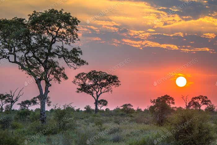 African sun  over Savanna plain