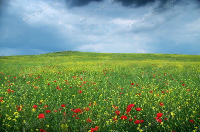 Pradera de flores de primavera.