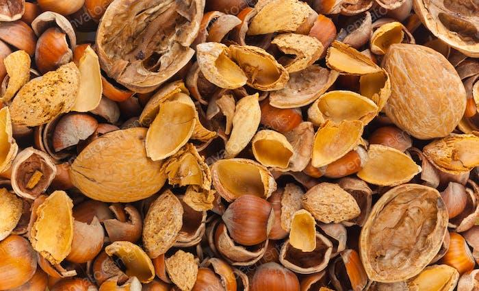 Empty shells of walnuts hazelnuts almonds