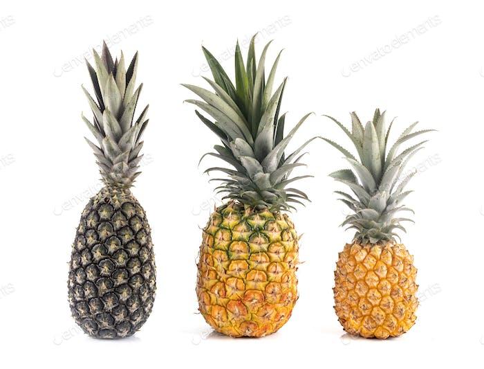 pineapples in studio