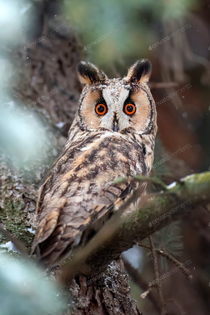 Owl sit in a tree and looking on the the camera
