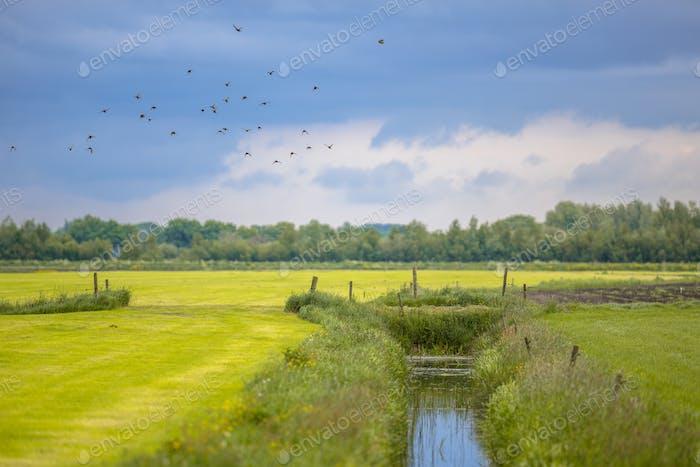 Agricultural landscape Netherlands