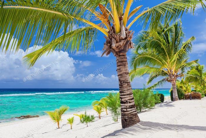 Palm trees overlooking tropical beach on Roratonga, Cook Islands