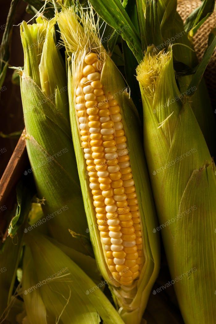 Roh Bio Gelb Seet Mais