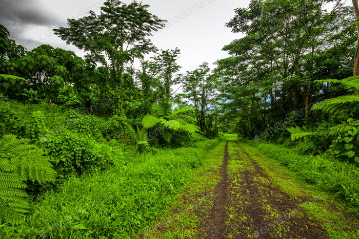 Road deep in the tropical dense forest
