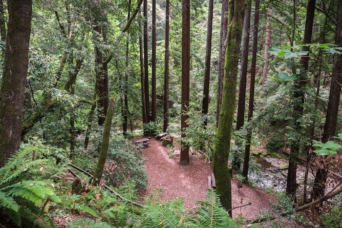 Picknickplatz in einem Wald von Redwood (Sequoia sempervirens), Kalifornien