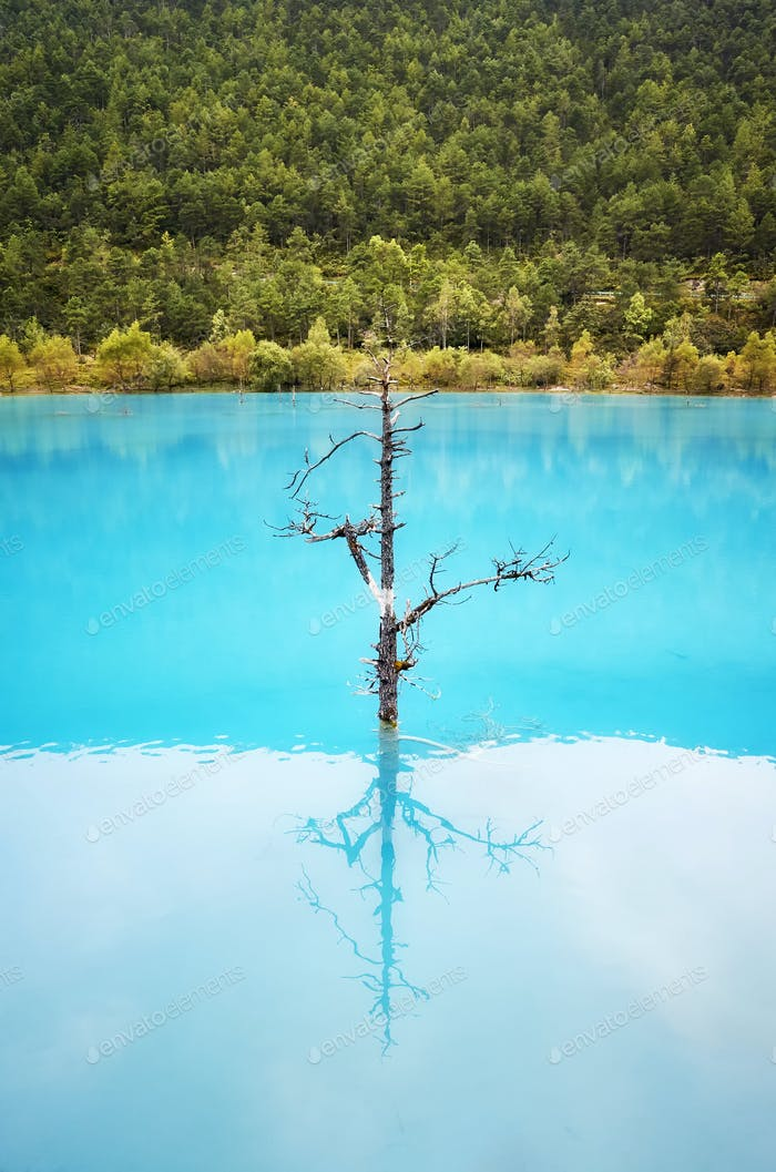 Lonely tree reflected in turquoise blue water.