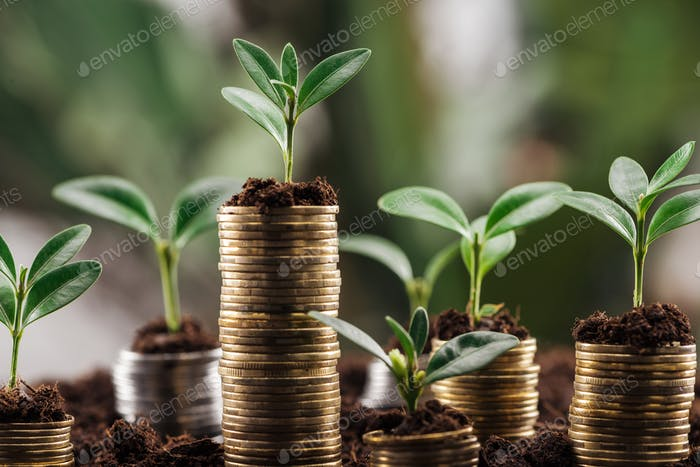 coins with soil and green leaves, financial growth concept