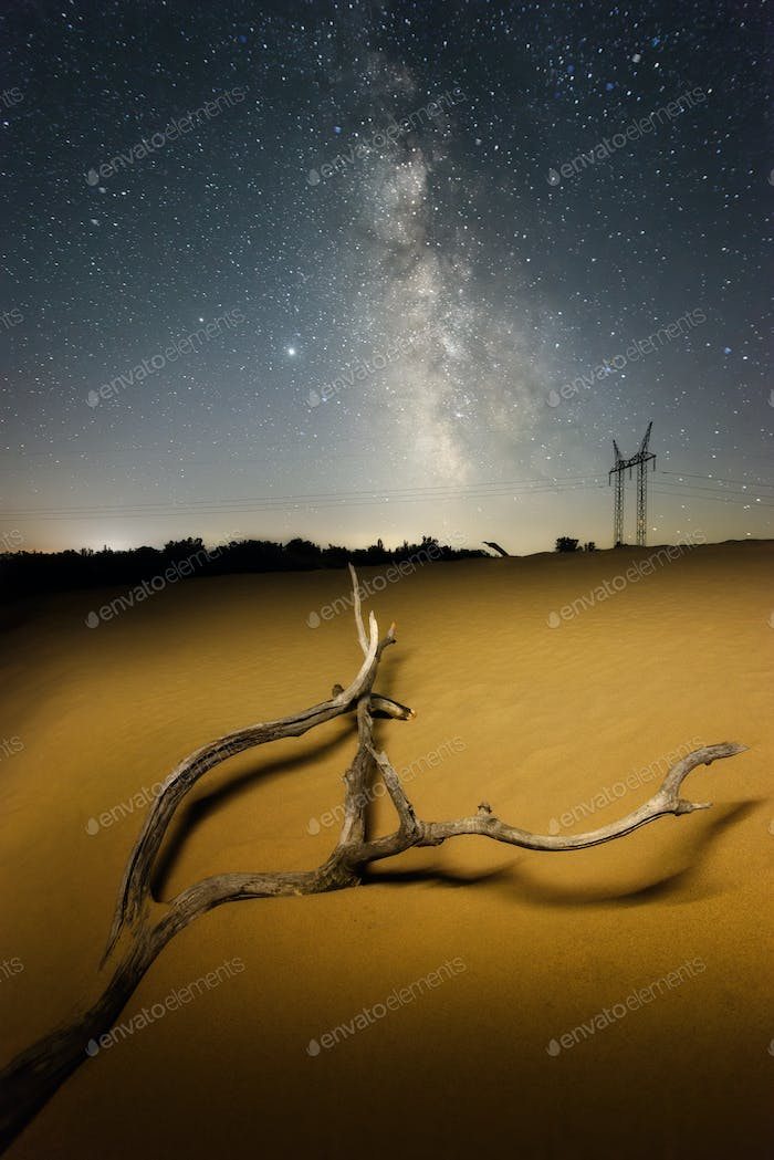 Tree branch in the desert