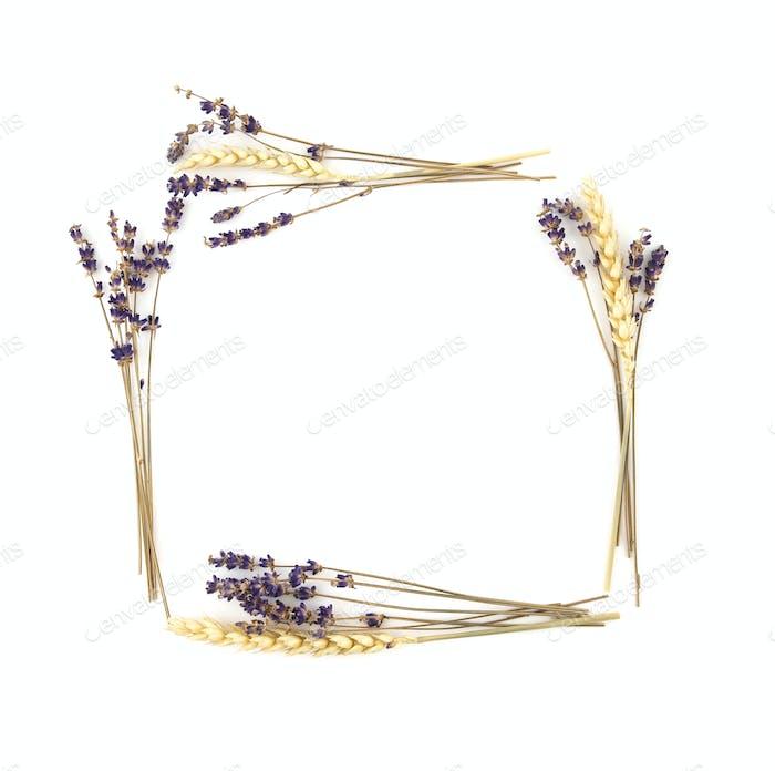 Violet Lavender Flowers and Rye Frame Background
