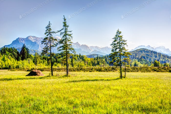 Wiese in den bayerischen Alpen