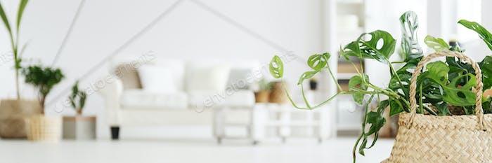 Verschwommenes Foto mit Pflanze