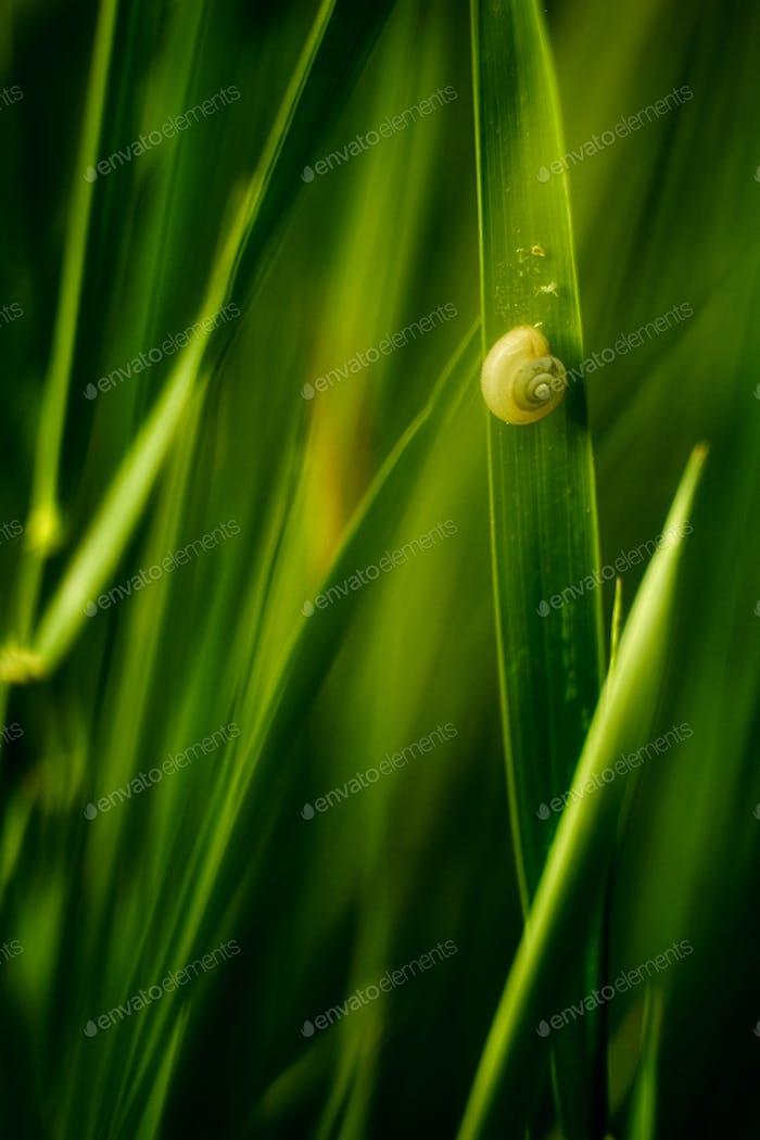 Snail on green grass