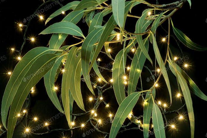 Lichterkette und Gummibaumblätter