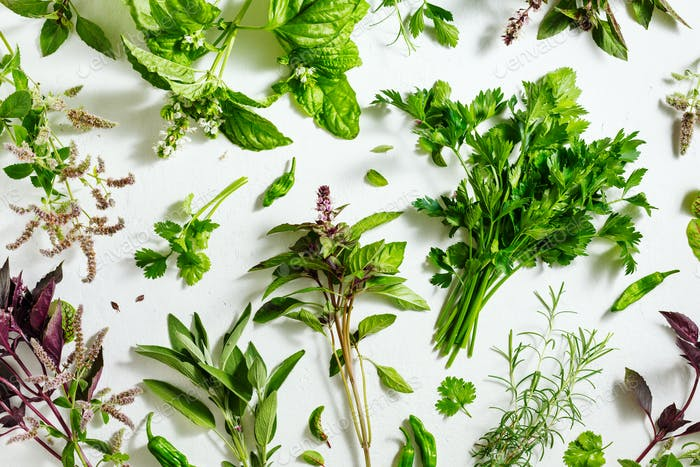 Fresh picked herbs from the garden