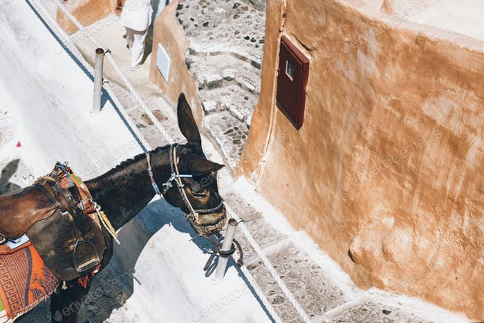Thumbnail for Santorini Donkey in Fira