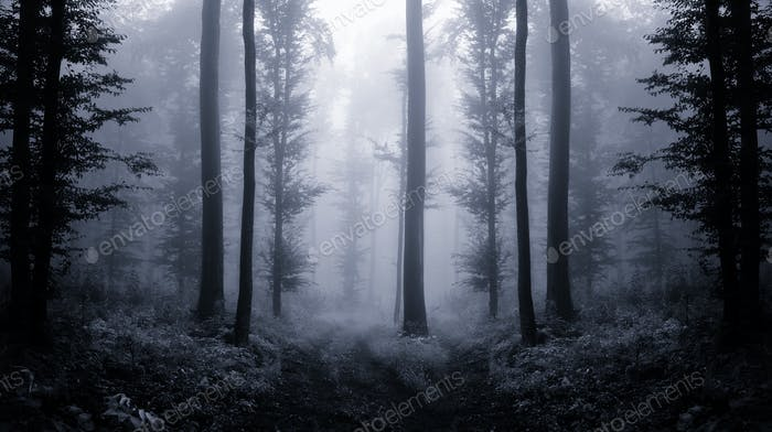 Surreal forest with trees in fog, fantasy atmosphere