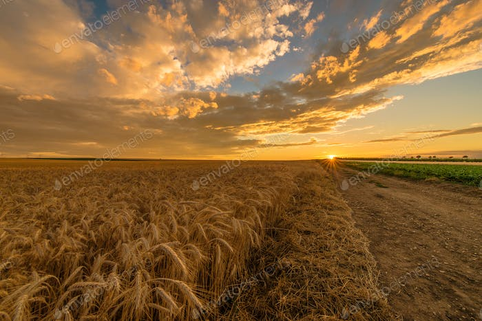 Countryside Scenic Sunset
