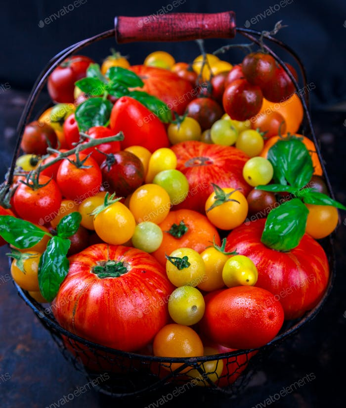 Various Fresh  Tomatoes in an iron basket .Food or Healthy diet concept.