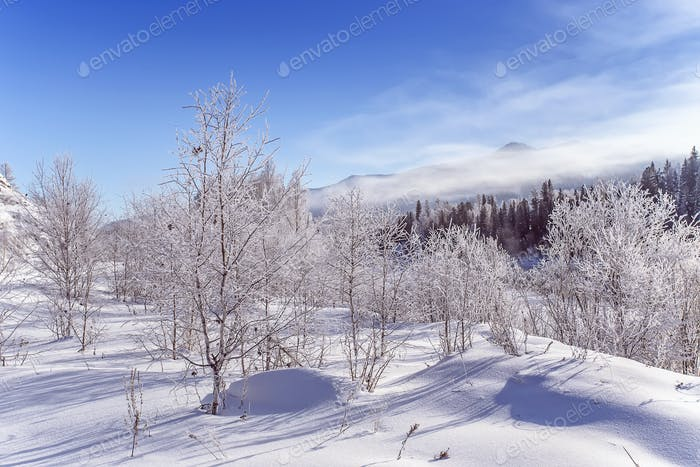 Winter snowy snag near a river , Russia, Siberia Altai