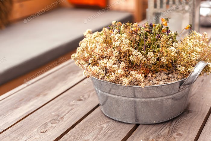 Potted heather flowers on wooden table outdoors