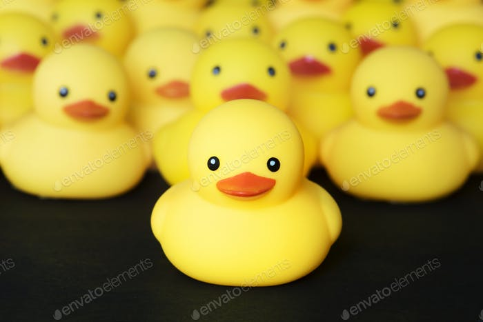 Closeup of rubber duckies