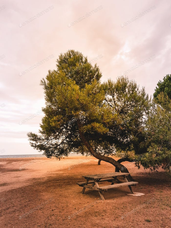 Pine trees on the Mediterranean seashore