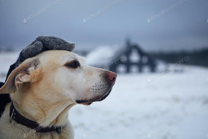 Person in warmer Kleidung streichelt Hund auf verschneitem Feld