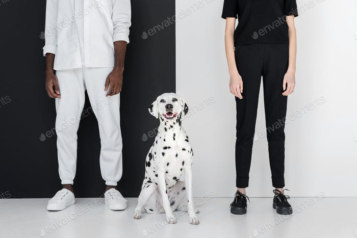 cropped image of african american boyfriend and girlfriend standing with dalmatian dog near black
