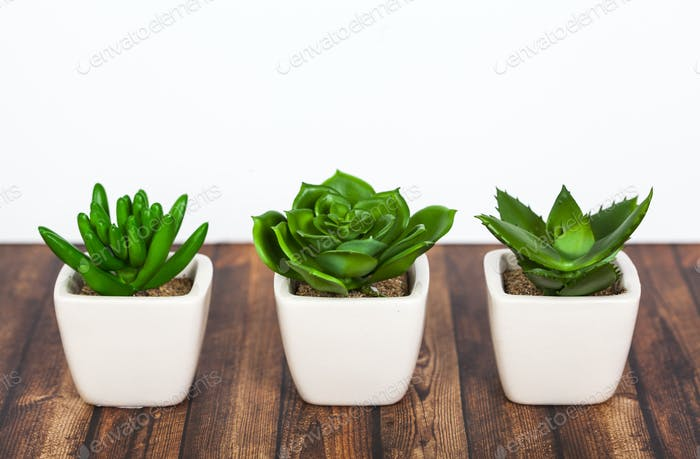 Green plants on wooden background
