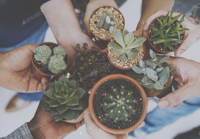 Diverse Menschen Hände halten Kaktus Natur