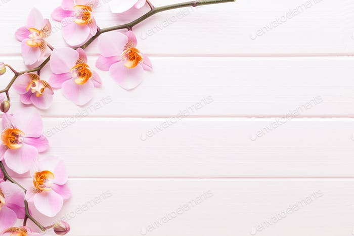 Orchid flower on the wooden pastel background. Spa and wellness scene.