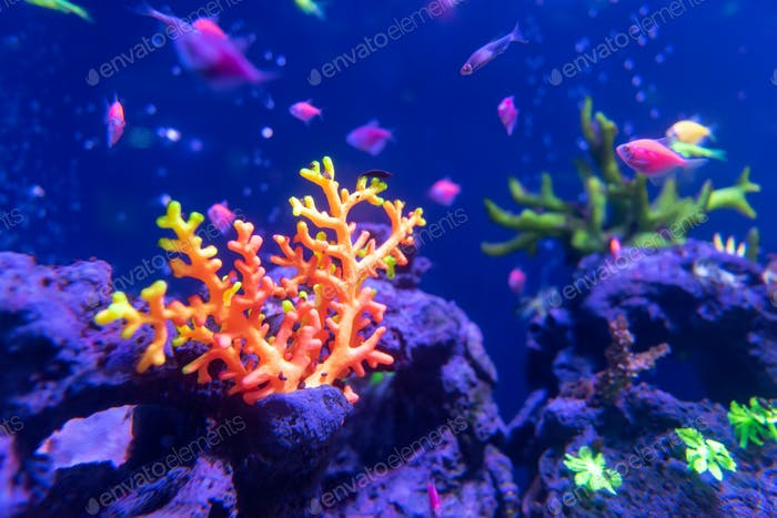 Underwater world fish Aquarium