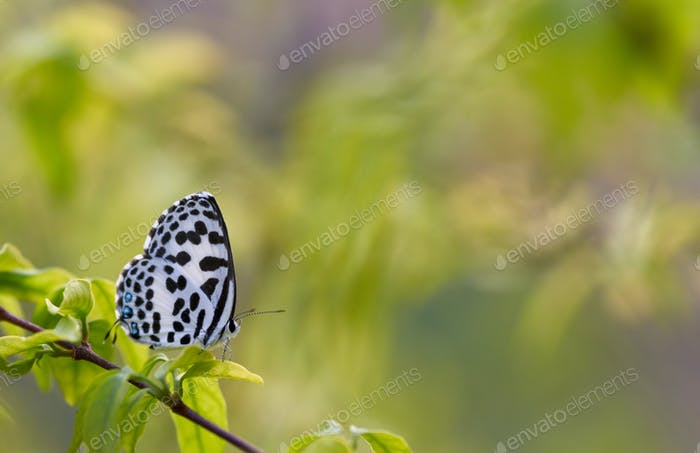White butterfly on the green leaf
