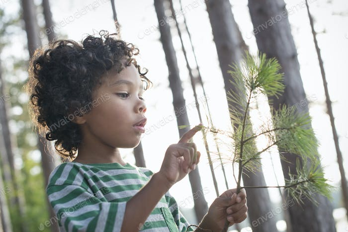 A child holding a tree branch looking at the pine needles.