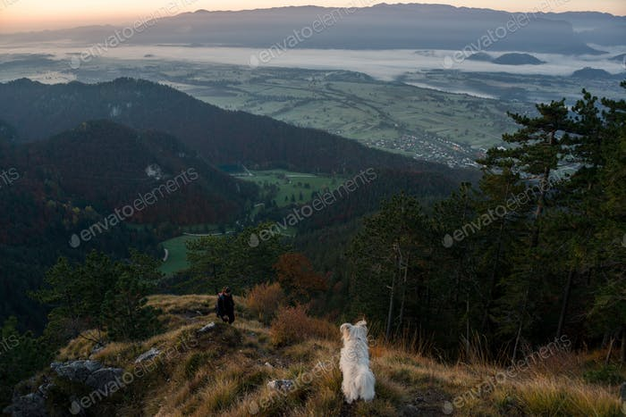 Dog at sunrise in the mountains