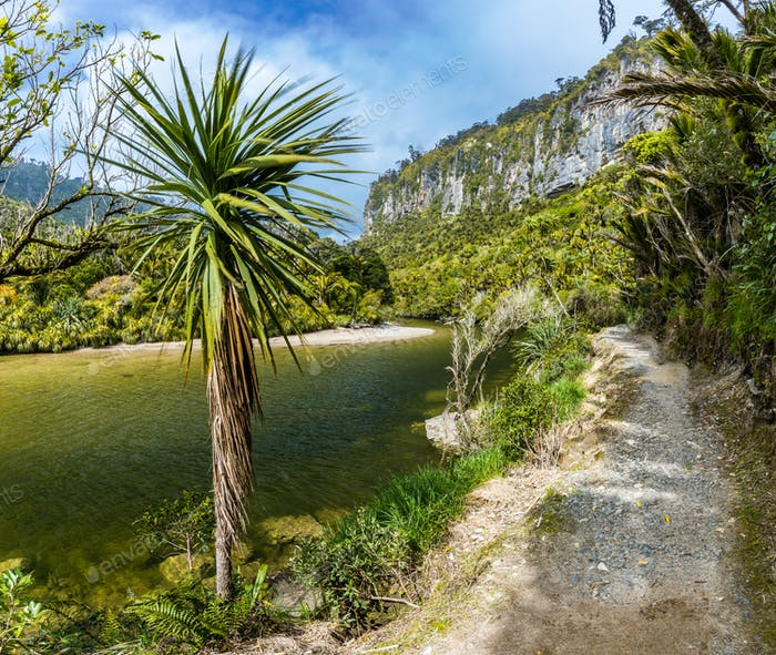 Porarari river track near Punakaiki, West Coast, South Island, N