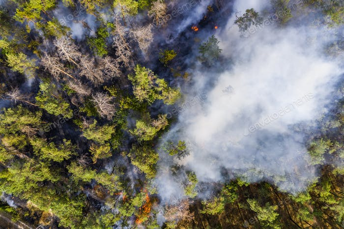 Aerial view of wildfire in forest. Burning forest and huge clouds of smoke