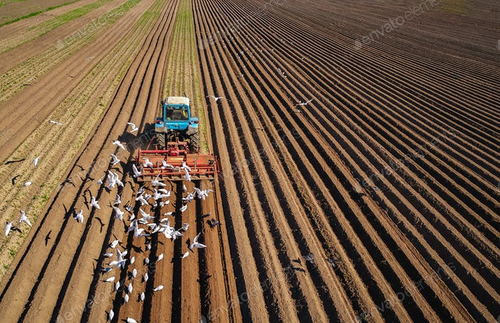 Agricultural work on a tractor farmer sows grain. Hungry birds a